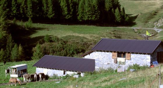 Dritte Etappe: Località Malga Cadino (1700 mt)